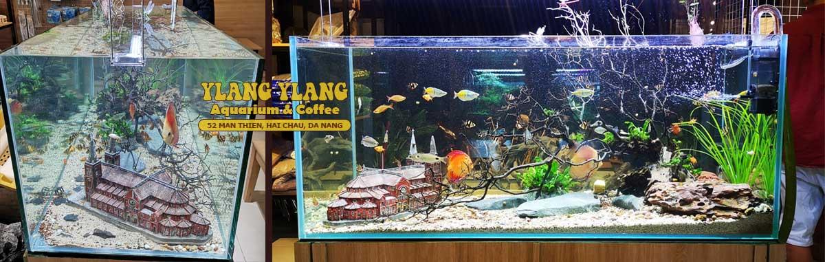 banner-ho-thuy-sinh-dep-tai-ylang-aquarium-coffee-da-nang